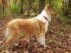 Collie in the wood wallpaper wallpaper