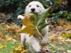 Dog carry leave tree wallpaper